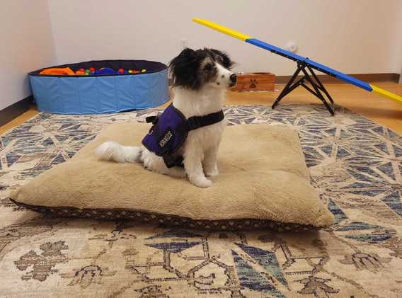 CCN-Canine Training Room.jpg