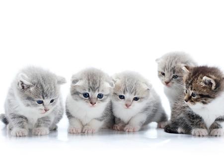 Kitten Season: How You Can Help