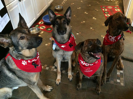 Dogs Paying it Forward through Blood Donor Program