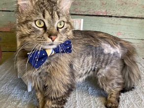 Adopt-A-Cat Month Perfect Time to Find New Feline Friend