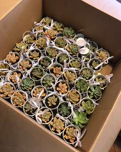 succulents for favors