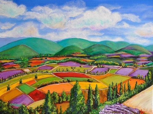 Lavender Fields of Sault, France