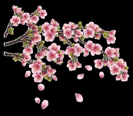 125-1251245_sakura-png-image-background-