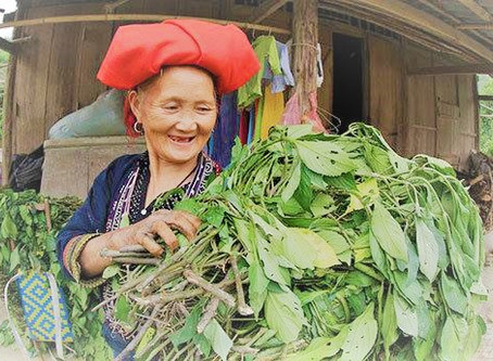 HERBAL BATH REMEDY –PRESERVING TRADITION AND CULTURE OF THE DAO