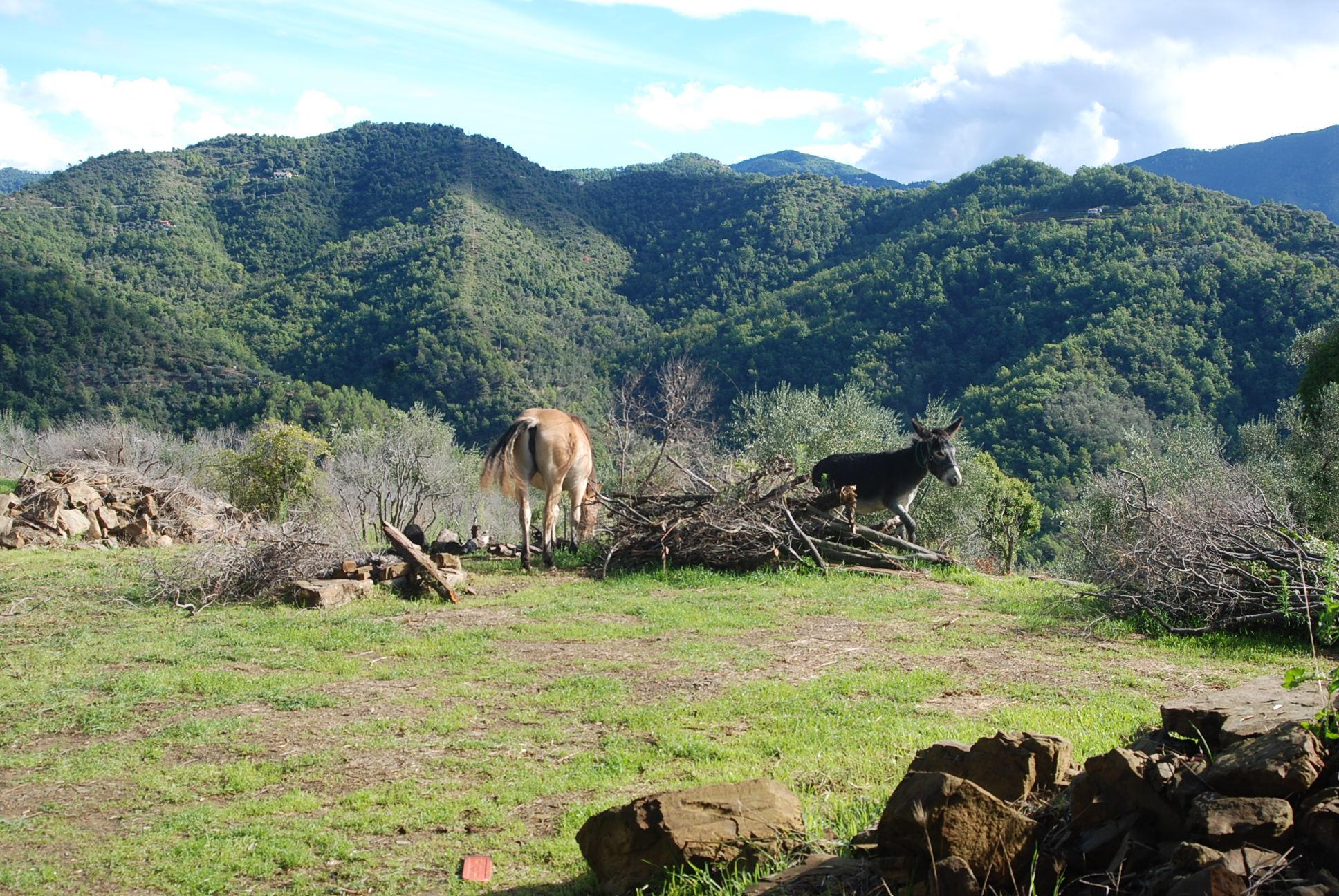 cavallo & asino in campagna