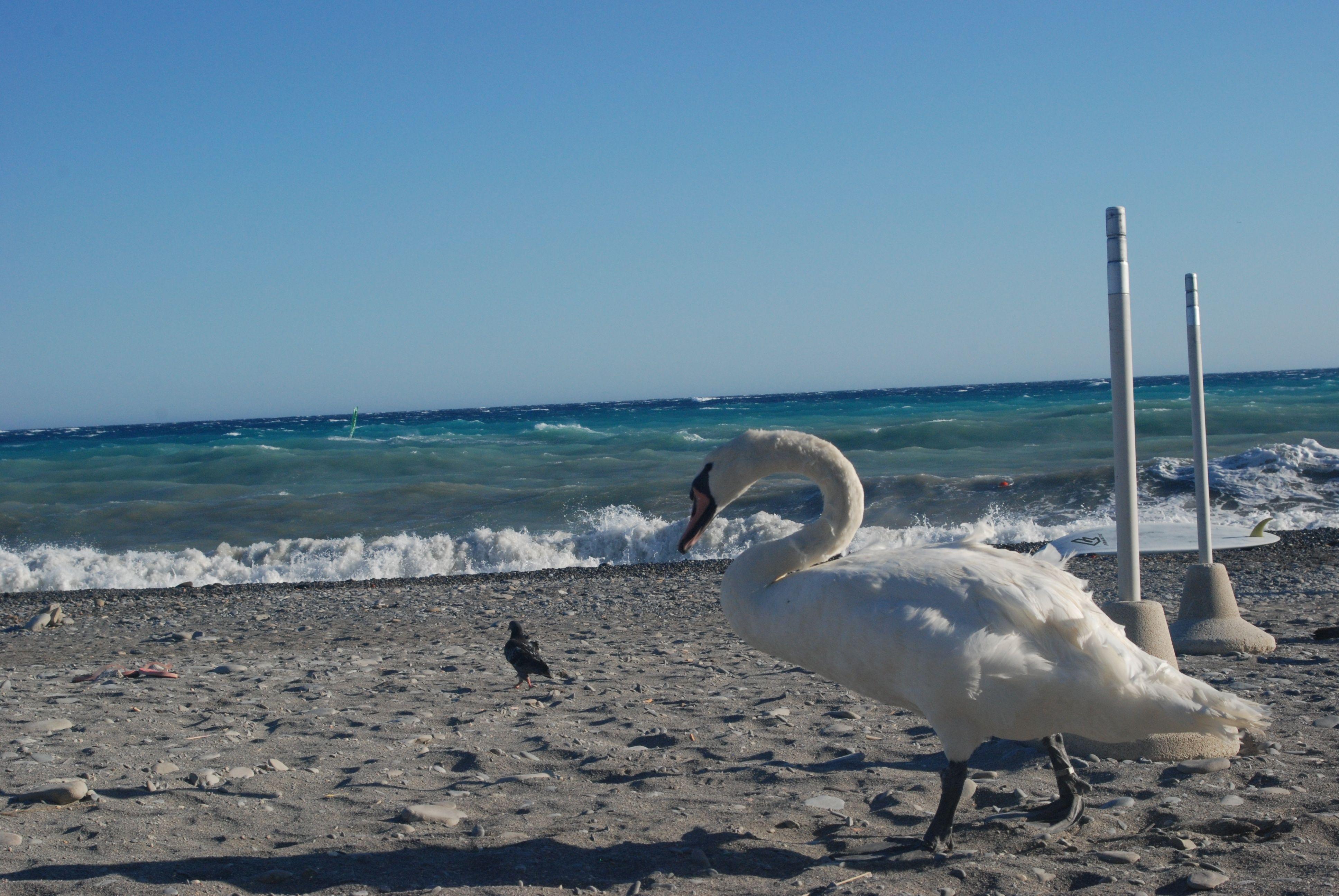 al mare © casadibasanni