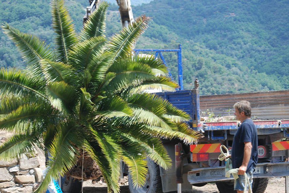 la palma - 2_opt.jpg