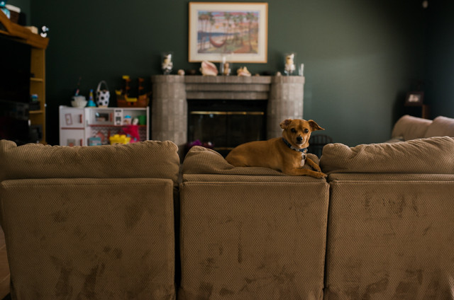 Maple Valley Family Photography dog