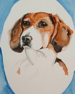 Beagle Babe