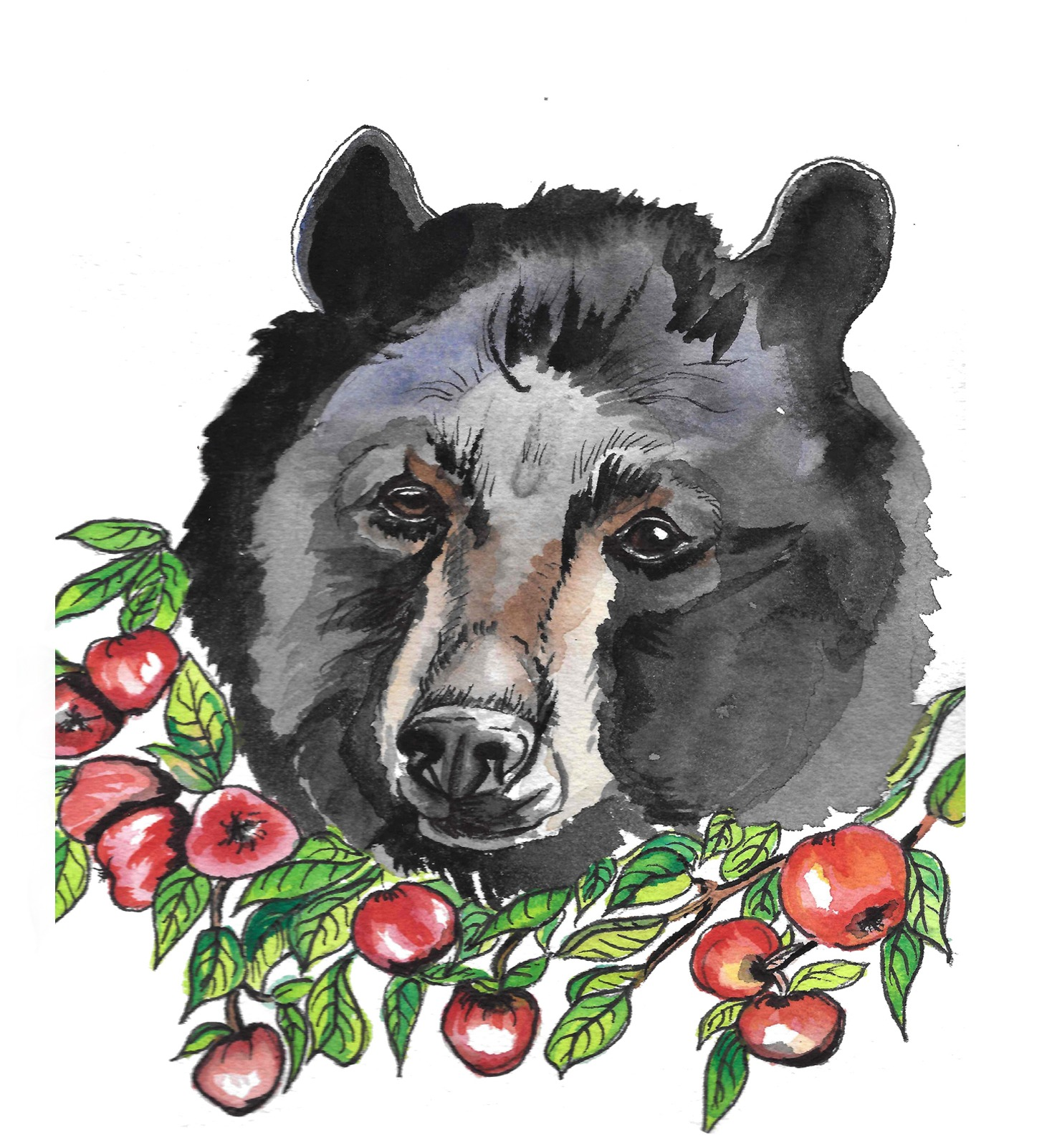 Bear with His Honey Crisp Apples