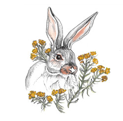 Hare and the Rabbit Brush