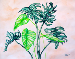 Philodendron and Monstera