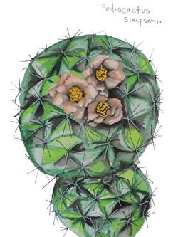 Ball Mountain Cactus