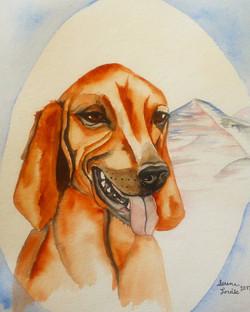 Ruby the Redbone Coonhound