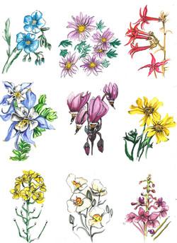 Wild Flowers 2018
