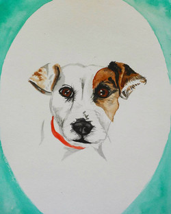 Gilly the Jack Russel