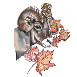 Big Horned Sheep in Autumn