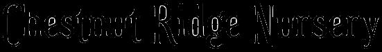 QB Logo.png