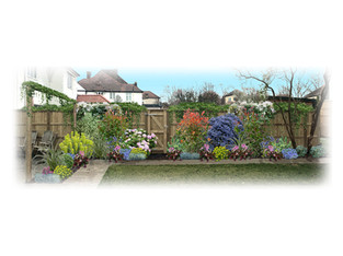 Planting Design, Menelik Road, Cricklewood, London