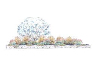 Public Planting Scheme Illustration