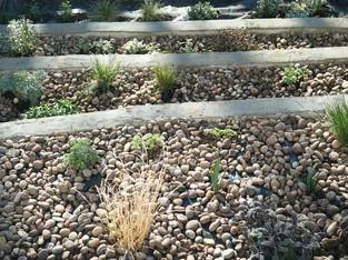 Front-newplants2-crop.jpg