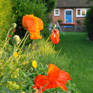 Cottage-Style Garden, London, NW11 »
