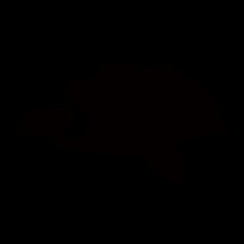 A006【ワニガメ】