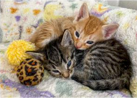 Snuggle Kittens.png