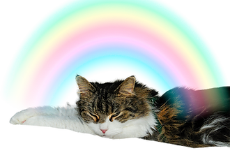 Mojito over the Rainbow.png