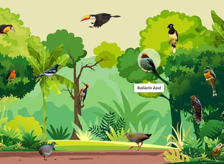 Los Sonidos de la Selva - Juego interactivo.