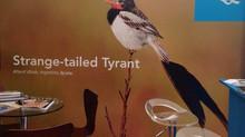 Mi Yetapá a la BirdFair