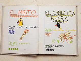 Mi primera Guía de Aves