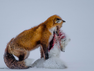 Ganadores del Wildlife Photographer of the Year 2015