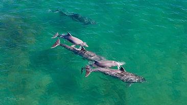 Avistaje de Fauna Marina
