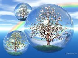 boule arbres