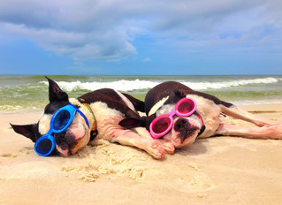 Dog-Friendly Beaches in New Jersey