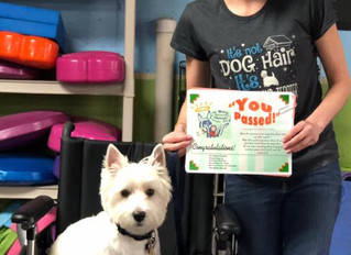 The latest My Dogs' Got Class Pet Therapy Grads