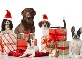 Doggy Christmas Gifts