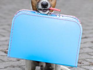 Pet Emergency Preparedness Tips
