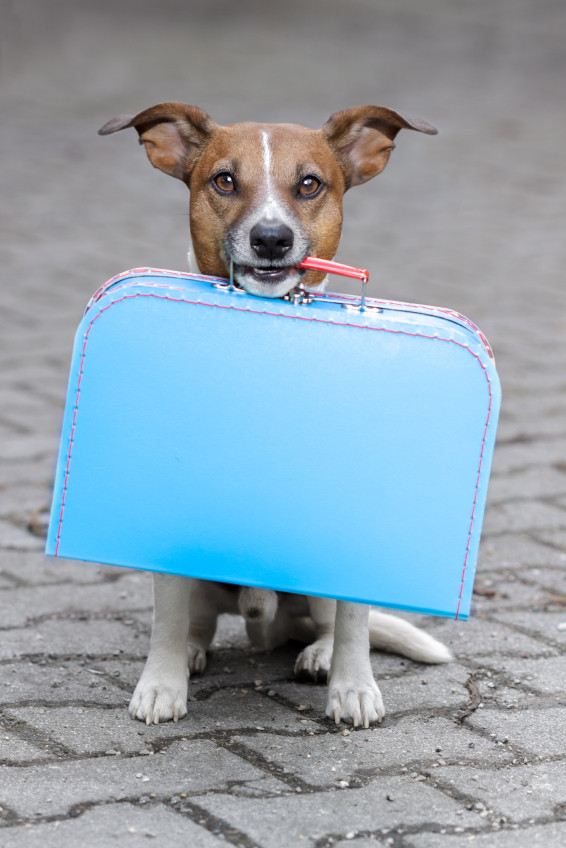 Make sure your pet is ready to go with you
