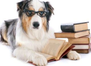 Canine Manners at Home Clinic