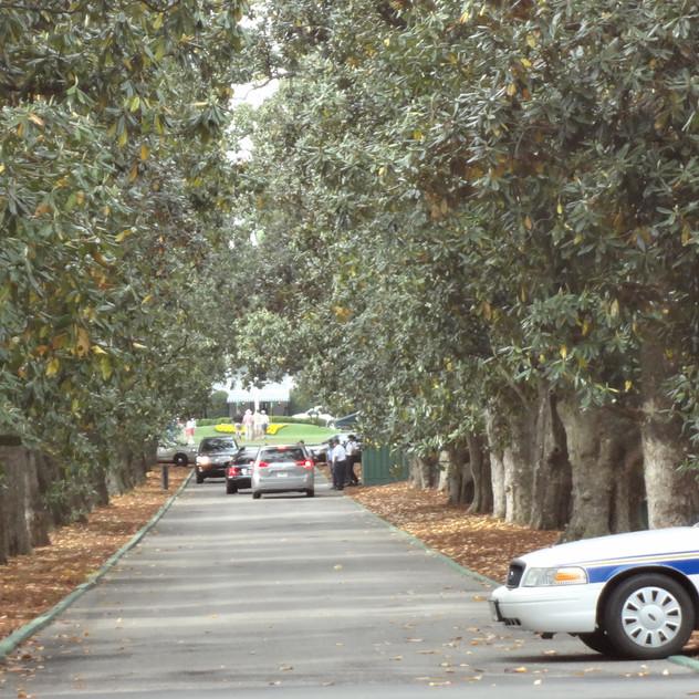 Magnolia Lane 4