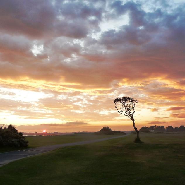 2009._Tree_at_Sunset_