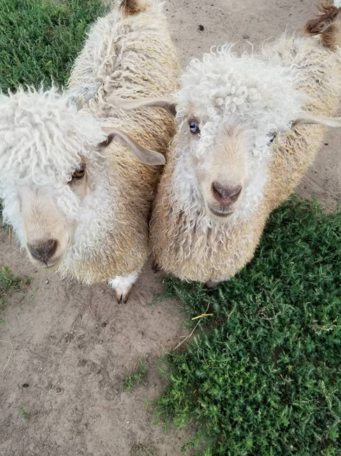Eddie and Jake on their first day on the farm