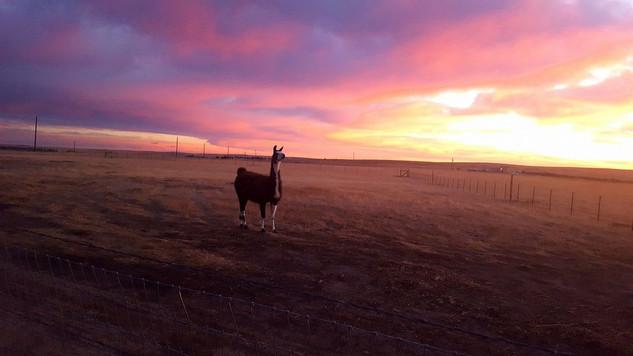 Abigail enjoying a gorgeous Colorado plains sunrise