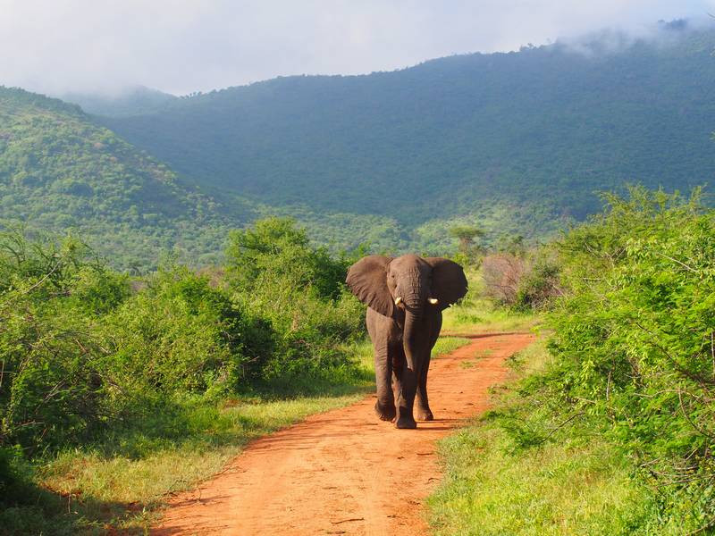 Your guide to Mkomazi national park with stunning Mkoma Bay  Tented lodge accommodation near Tanga