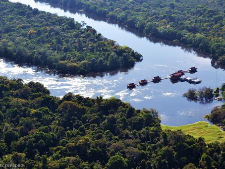 🇧🇷 A floresta está inundada em Mamirauá – e esta é uma ótima notícia!