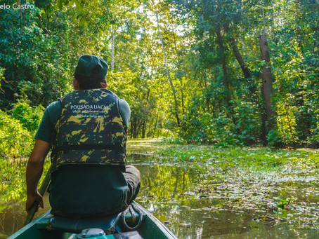 🇬🇧 The forest is flooded at Mamirauá Reserve – and that is great news!