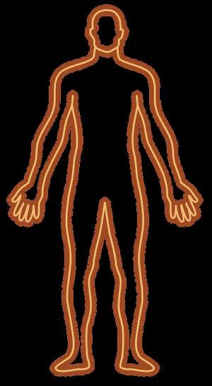 body display endocannabinoid system