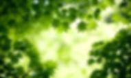 7022339-natural-background.jpg